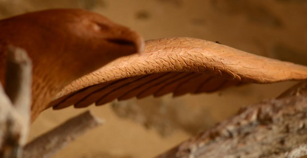 Sculpture d'aigle en bois, plumes