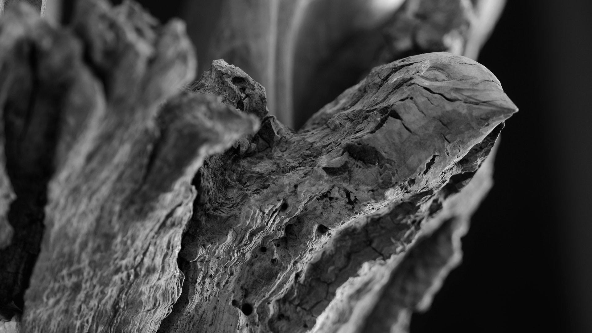 Sculpture sur bois oiseau, noir et blanc
