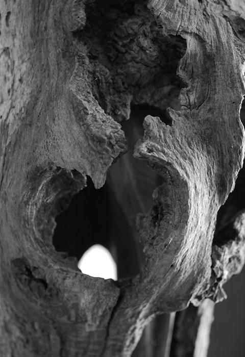 Vieux bois pour sculpture